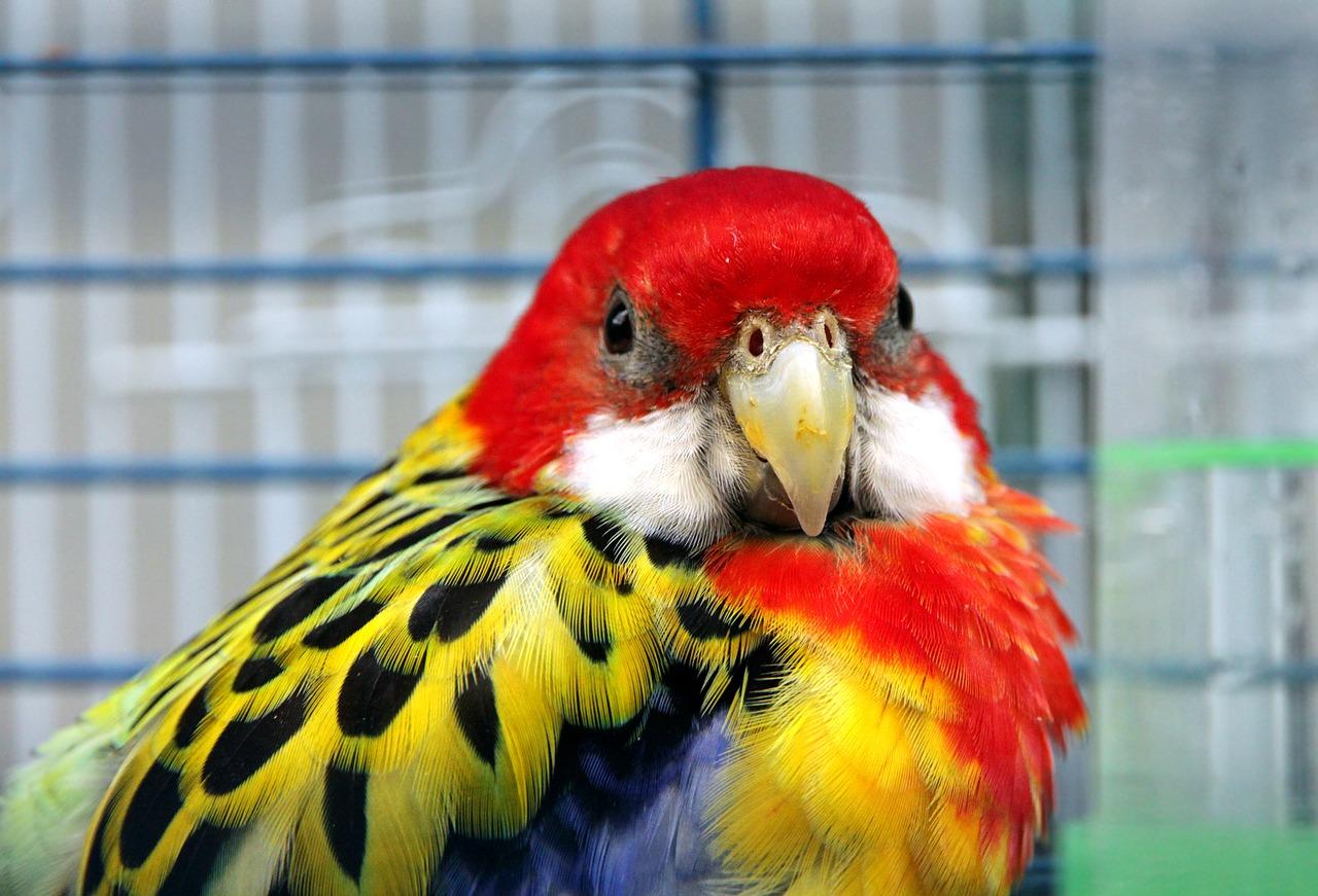 Quel oiseau acheter en animalerie?